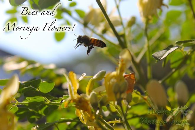 bees moringa