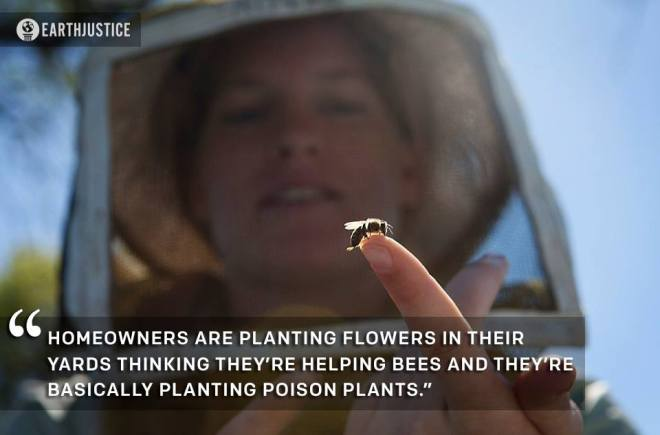 GARDENERS BEWARE: Plants that are killing bees!!!